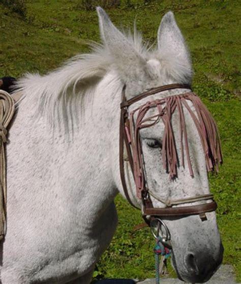 mule horse female pawnation missouri mules horses than faster