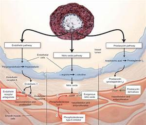 Key Pathways Involved In The Pathophysiology Of Pulmonary