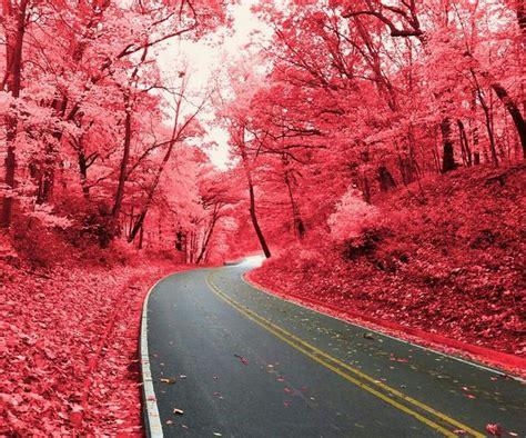 Bosque Rojo De Chernobyl.