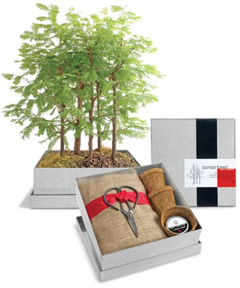 grow your own tree kit grow your own bonsai forest kit redwood