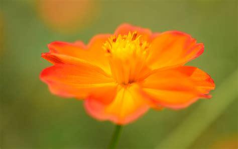 Black And Orange Flower Wallpaper by Macro Wallpaper Orange Hd Desktop Wallpapers 4k Hd