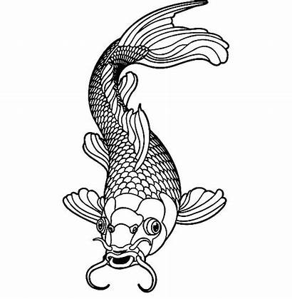 Koi Fish Coloring Male Healthy Adult Colouring