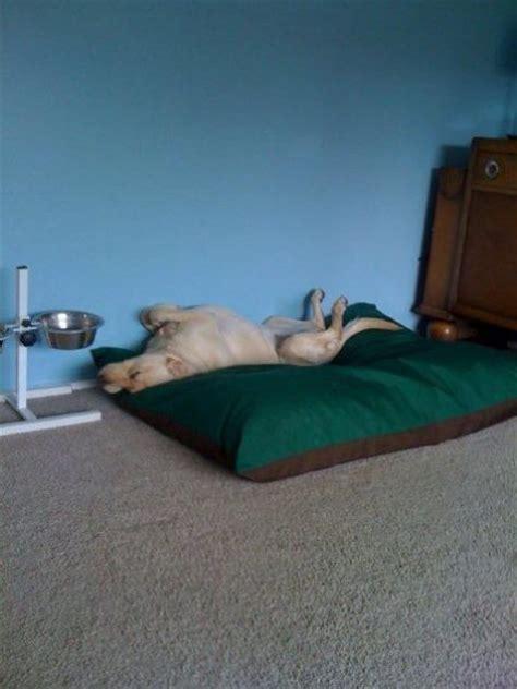 kennelmate large dog bed luxury dog bed washable dog