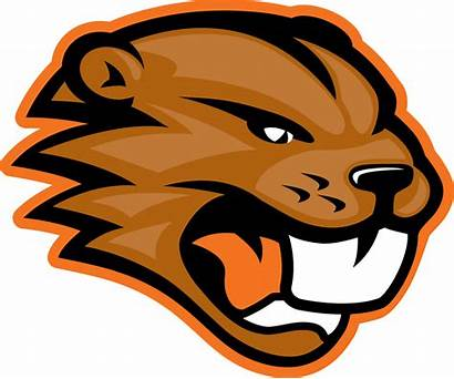 Beaver Clipart Beaverton Mascot Logos Transparent Beavers