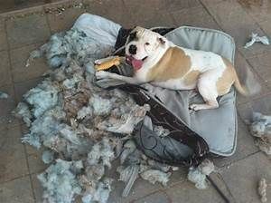 the unexpected way a somewhat disastrous dog rescue made With dog beds for destructive dogs