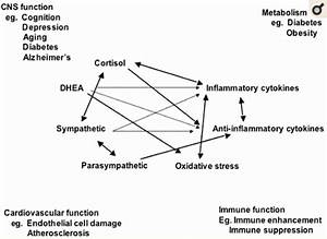 A Patient Guide To The Endocrine System  Hormones  Glands