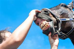 Tooth Problems In Older Horses  U2013 Thomas Moore Feed