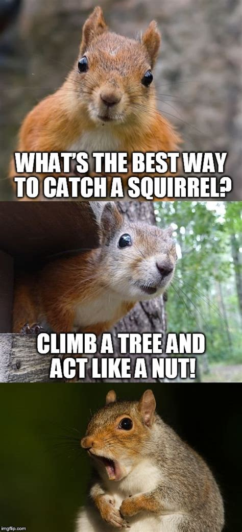 Squirrel Nuts Meme - bad pun squirrel imgflip