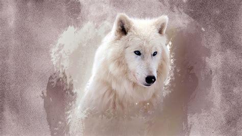 el lobo fondo de pantalla full hd id
