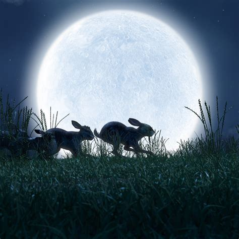Watership Down Wallpapers High Quality   Download Free