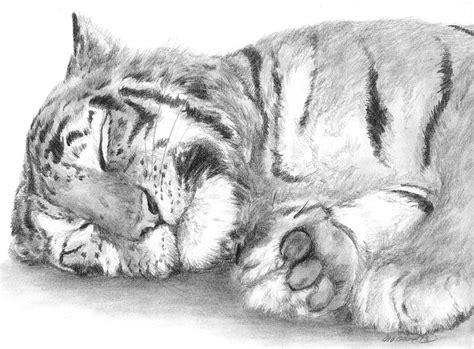 big cat nap  meagan visser