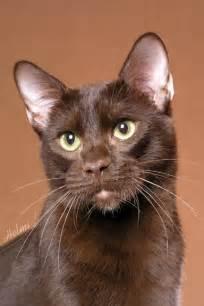 brown cat brown poc