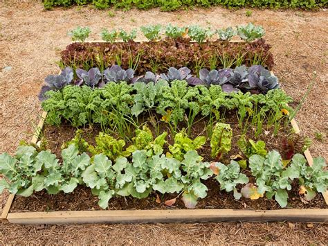 How To Plant A Vegetable Garden In Your Backyard by How To Plant A Vegetable Garden Hgtv