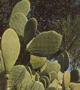 Cactus Sans Epine : plantes2 ~ Melissatoandfro.com Idées de Décoration