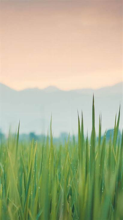 Iphone 6s Plus Wallpapers Backgrounds Retina Grass