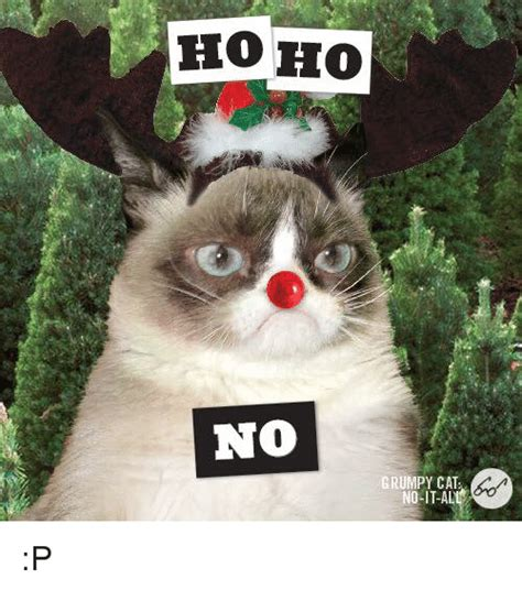 Angry Cat Meme No - angry cat memes no www pixshark com images galleries with a bite