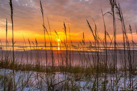sea oats photography