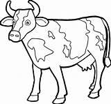 Cow Coloring Farm Animal Getdrawings sketch template