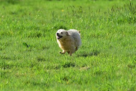 ahh  epic agility dog zoomies agilityfusioncom