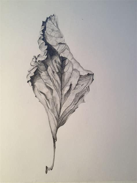 leaves petals  paints