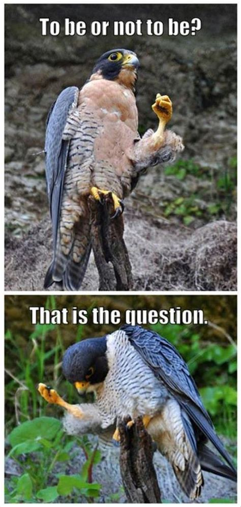 Crazy Bird Meme - 25 funny animal memes to make you laugh till you drop