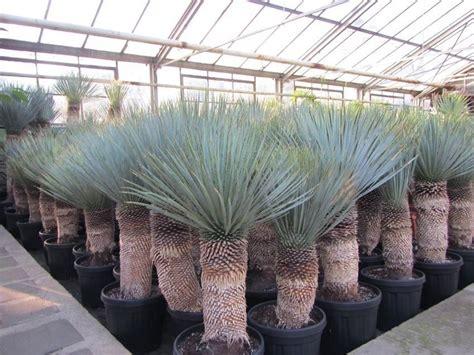 Winterhart Pflanze Im