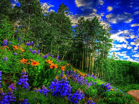 spring forest sky clouds flowers forest road wallpaper