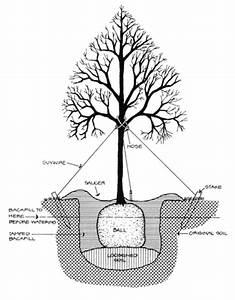 Tree Roots Diagram