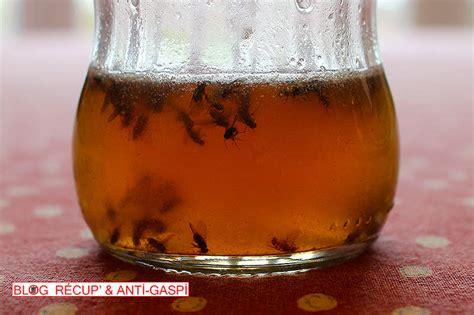 moucherons dans la cuisine pi 232 ge anti moucherons r 233 cup et naturel r 233 cup anti gaspi