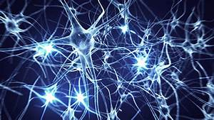 Neurons Logo  2