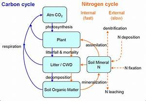 Clm  Biogeochemistry