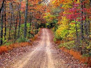 """""""Autumn Country Road"""" by NatureGreeting Cards ©ccwri"""