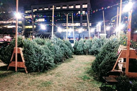 christmas tree lot near me free trees at lions club lot arlnow