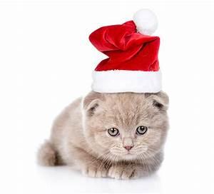 Weißer Wurm Katze : hintergrundbilder k tzchen katze neujahr m tze tiere wei er ~ Markanthonyermac.com Haus und Dekorationen