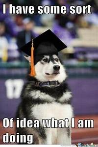 Husky Memes. Best Collection of Funny Husky Pictures