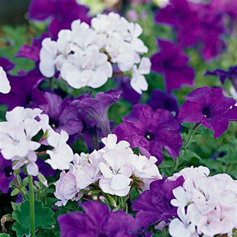 annual garden top annual plant pairings