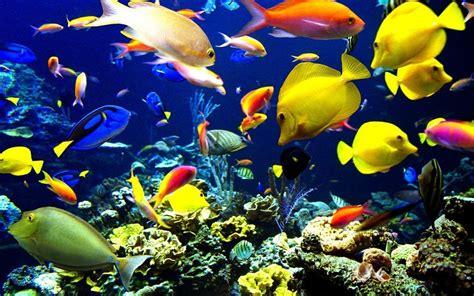 Ocean Life Wallpapers Wallpaper Cave