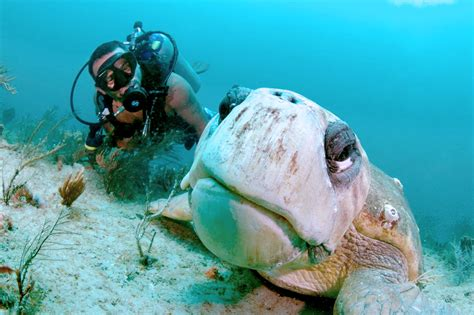 narcosis dive company scuba diving in west palm florida