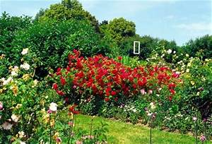 Garten Blumen Pflanzen : garten pflanzen gemuse ~ Markanthonyermac.com Haus und Dekorationen