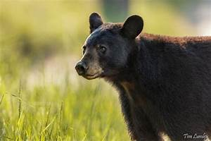 Life In The Taiga : taiga biome animals conserve energy future ~ Frokenaadalensverden.com Haus und Dekorationen