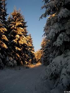 Sonne Im Winter : bild 2317 schnee wald winter sonne ~ Lizthompson.info Haus und Dekorationen