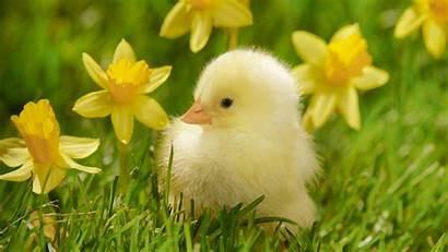 Spring Season Welcome Seasons King Animals Nature