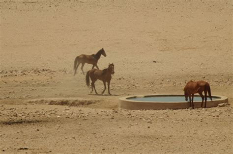 wild horses africa luederitz diamonds wind tall ship horse south namibia