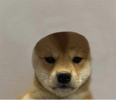 Woah Doggo With No Brim Lwaiy