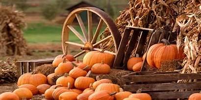 Harvest Autumn Header Fall Pumpkin Desktop