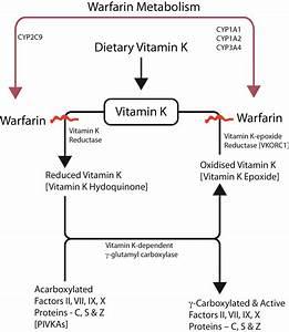 87 Protamin Sulfat  Sulfat Protamin
