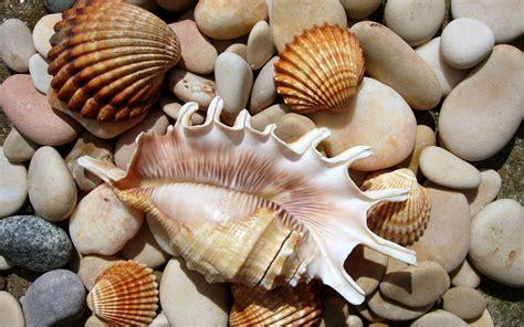 Seashells On The Rocks Hd Desktop Wallpaper Widescreen
