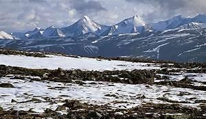 Tundra Maior Bioma Do Planeta Onde Encontrar