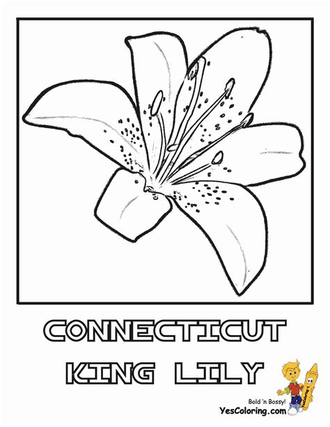 luxurious coloring flower picture lily  easter flower