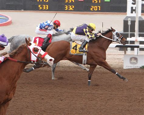 horse quarter texas racing martin west thing jacky maturity el paso yard sure running wins owners height sun pete monaco